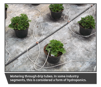 Drip Tubes to pots Janoski, hydroponics
