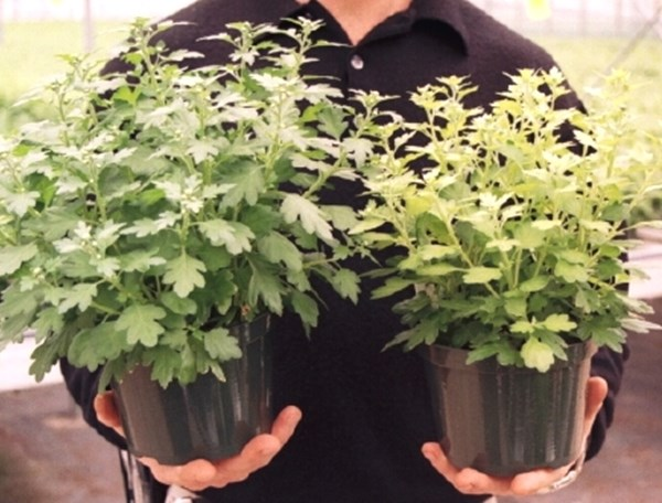 Role of Silicon in Plant Culture | PRO-MIX Greenhouse Growing