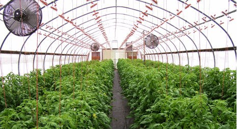 Greenhouse Herb And Vegetable Production U2013 Part 3/4 U2013 Greenhouse Environment
