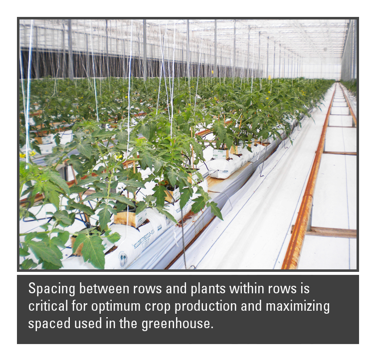 Spacing Between Rows And Plants For Optimum Crop Production And Maximize  Spaced Used In The Greenhouse