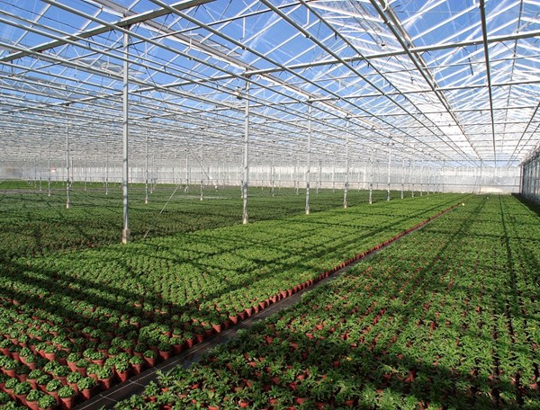 Greenhouse Herb and Vegetable Production – Greenhouse Structure