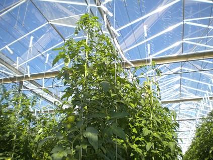 Producci n de hierbas arom ticas y hortalizas en for Estructuras para viveros plantas