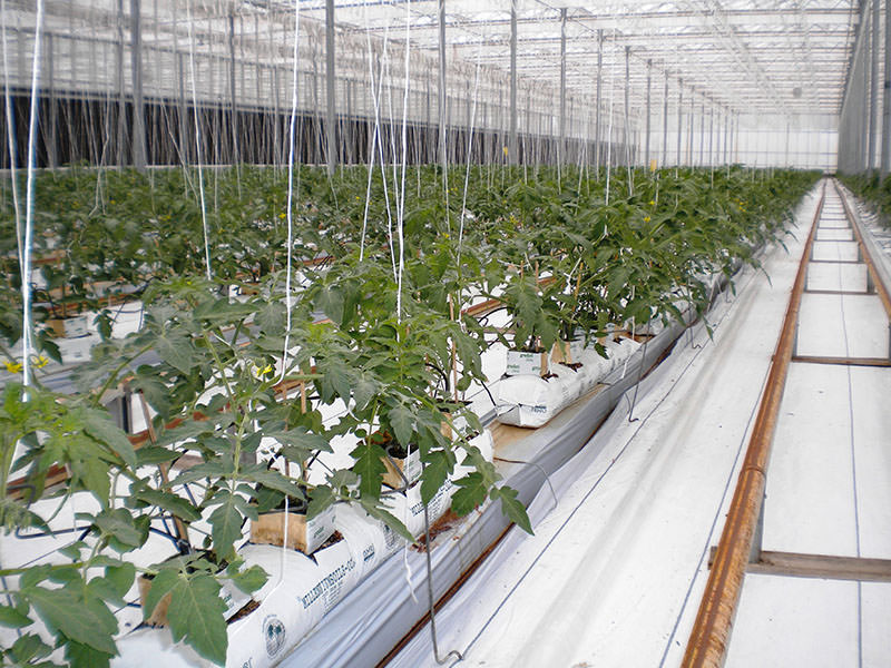 Spacing between rows and plants for optimum crop production and maximize spaced used in the greenhouse.