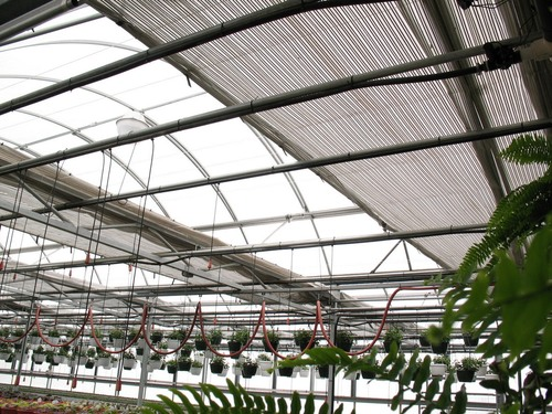 Shade curtains to help cool greenhouses in summer.