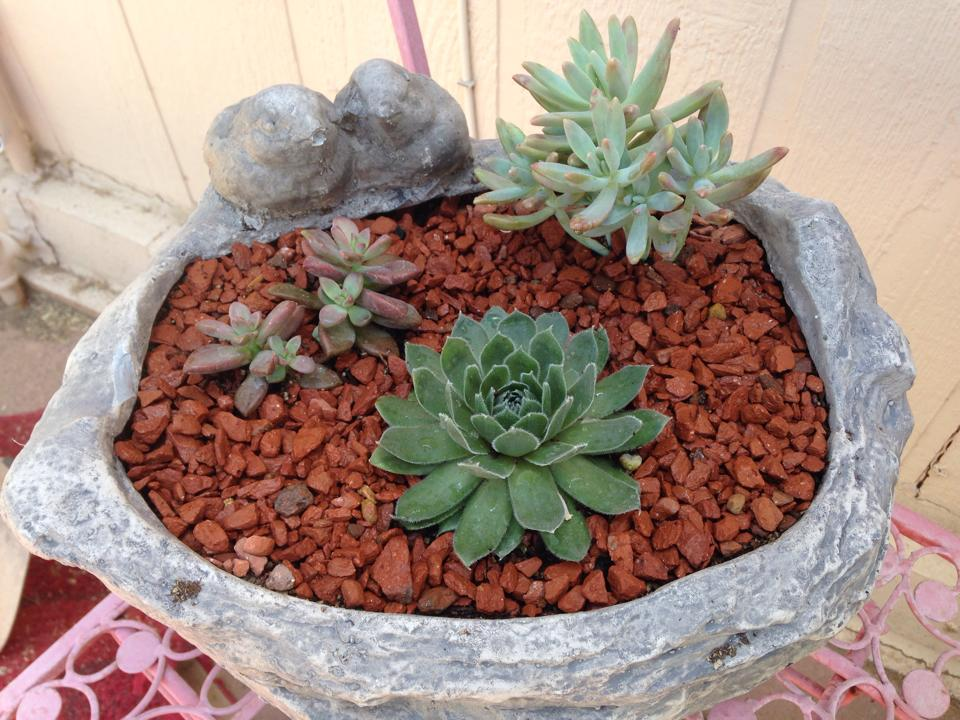 Mesquite Valley Growers Nursery - succulent planter