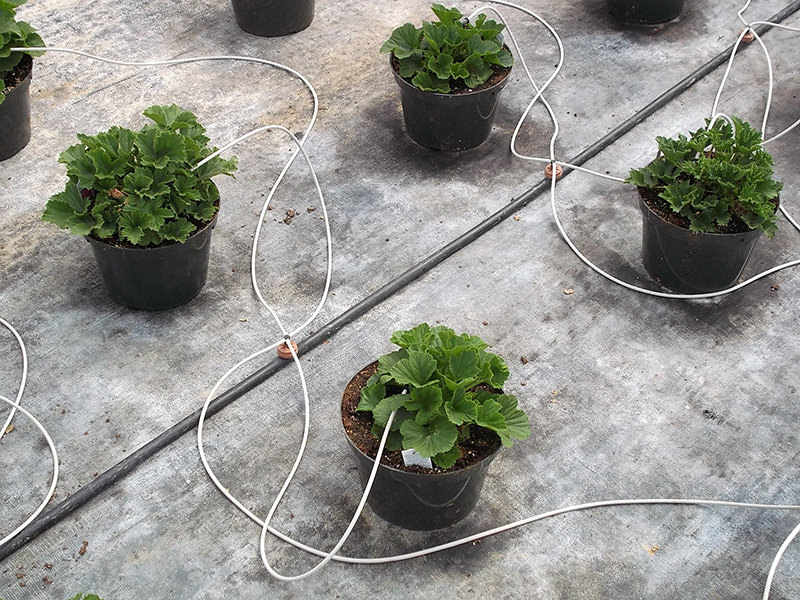 Watering through drip tubes. In some industry segments, this is considered a form of hydroponics