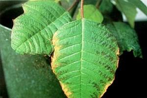 Rol del potasio en el cultivo de plantas pro mix for Potasio para plantas