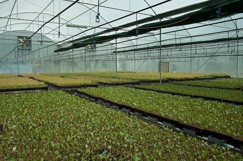 watering_greenhouse2.jpg