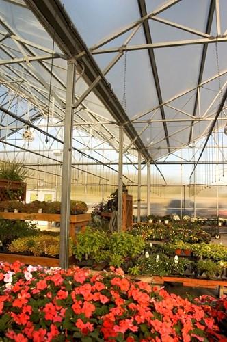 greenhouse_sanitation.jpg