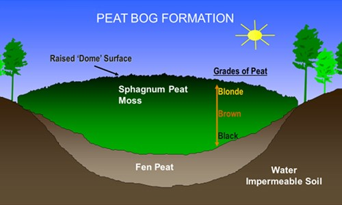 Myth Series: Peat-Based Growing Media are Sterile | PRO-MIX