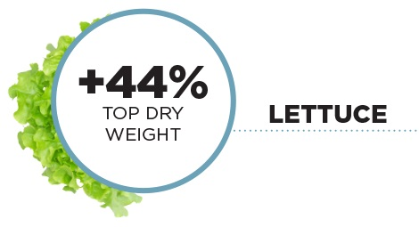 Lettuce +44% Top Dry Weight Results PRO-MIX HP MYCORRHIZAE