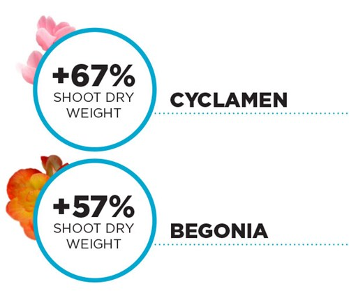 +67% shoot dry weight Cyclamen +57% shoot dry weight Begonia PRO-MIX HPCC MYCORRHIZAE