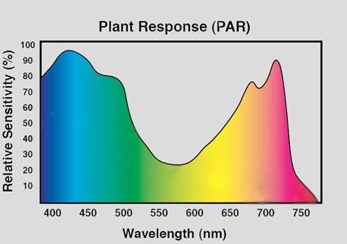 Risultati immagini per par plant