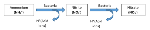 Nitrification of ammonium into nitrate through soil bacteria PRO-MIX