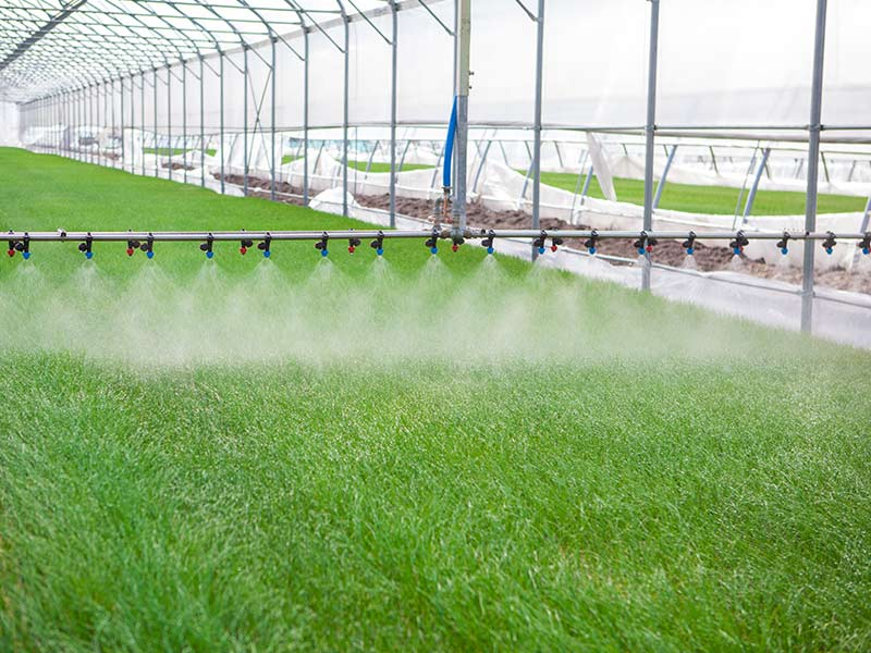 promix greenhouse growing sprinklers