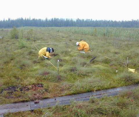 Research on a restored peat bog in Quebec.