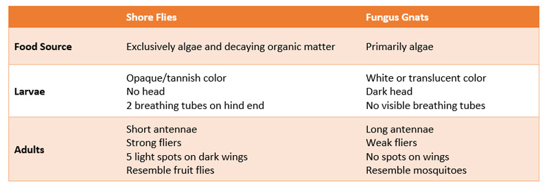 Comparison Chart Shore Flies Fungus Gnats