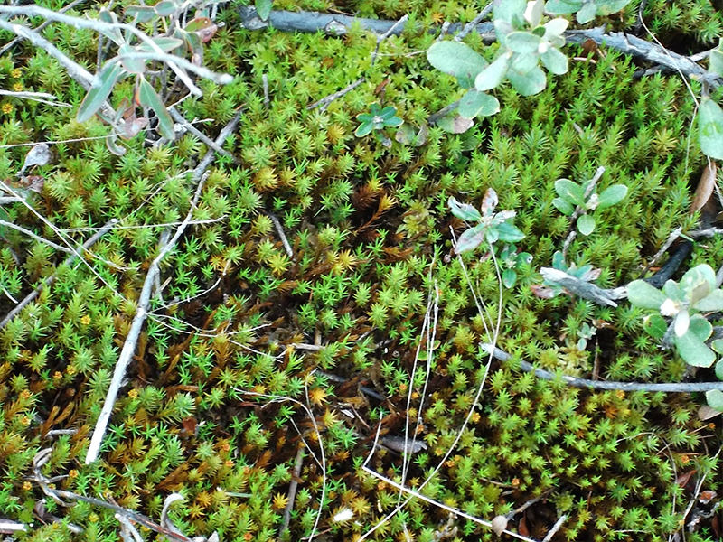 promix_greenhouse_growing_Sphagnum-moss.jpg