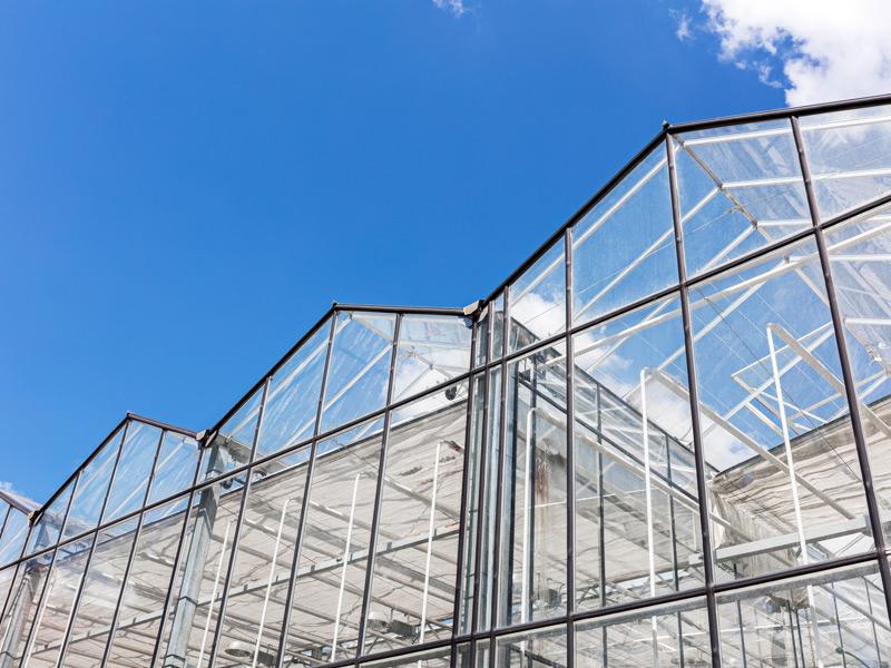 Saneamiento de invernadero: Saneamiento de invernadero: Preparación para una temporada exitosa