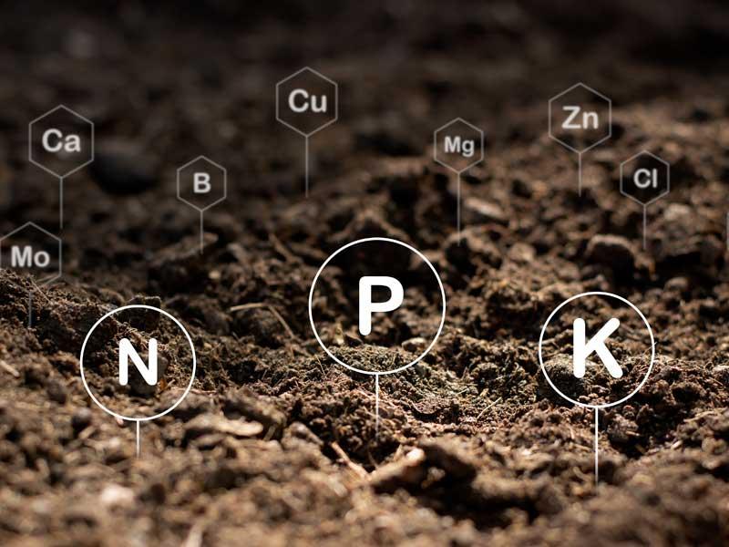 Formas de nitrógeno tóxico