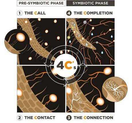 Figura 4C