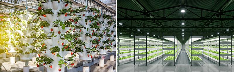 torres de cultivo verticales hidropónicas y gran operación agrícola vertical interior